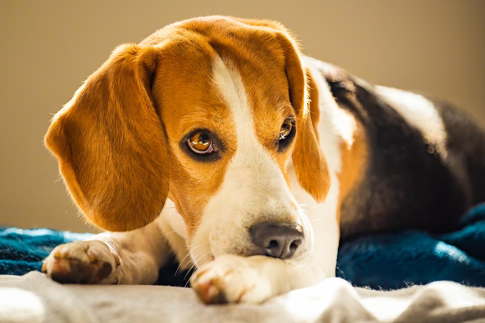 Allergies in Dogs: How to Identify & Treat Your Dog's Seasonal Allergies