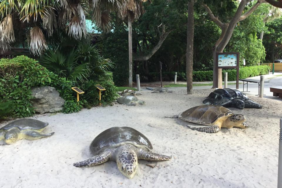 Gumbo Limbo Nature Center in Boca Raton, Florida: A Beacon for Environmental Education, Research & Conservation