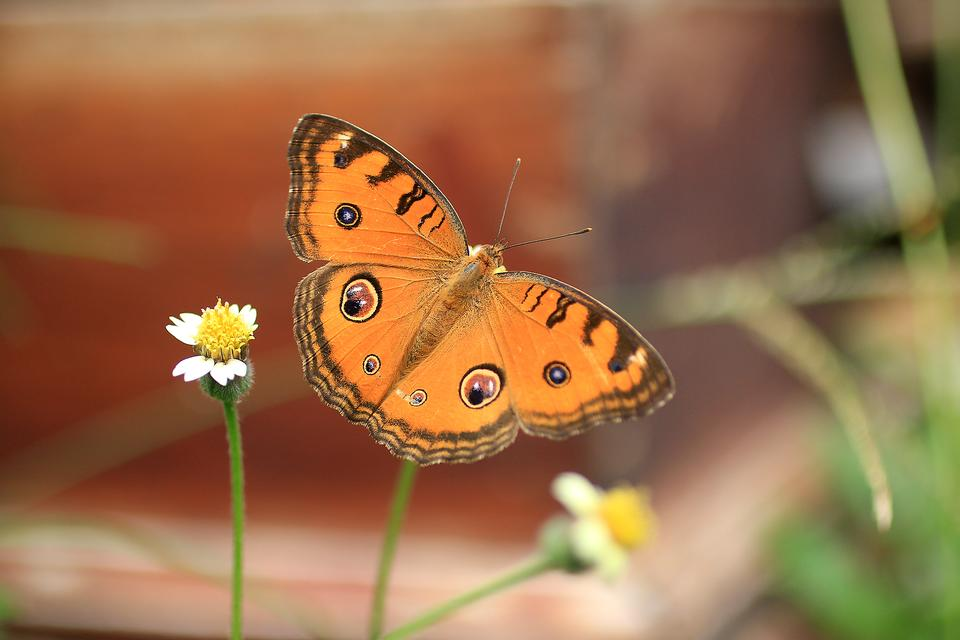 Live Butterfly Cam: Virtual Positivity & Homeschooling Activities From the San Diego Zoo