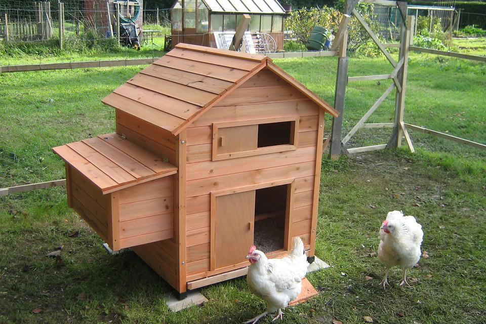 DIY Chicken Coops: What's the Scoop on the Backyard Chicken Coop?