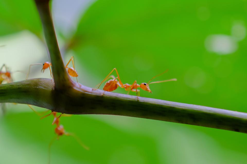 Getting Rid of Ants in Your Home: Here's a Natural Way to Control Ants Without Pesticide!