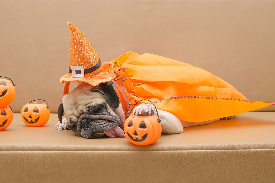 Pet Safety on Halloween Night: How to Help Different Dog Personalities Enjoy (or Avoid) Halloween