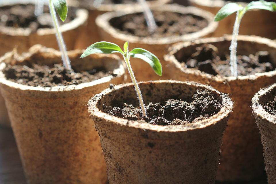 Sprouting Seeds at Home: 10 Creative Ways to Sprout Seeds for Your Spring & Summer Gardens