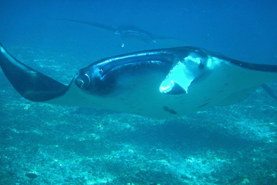 Komodo Island: My Amazing Experience Diving With Giant Manta Rays in Indonesia