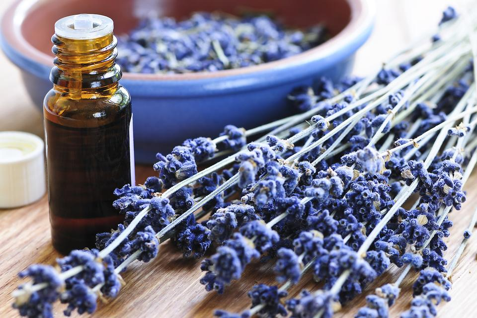 Lavender Essential Oil: How to Use This Oil for Health & Wellness