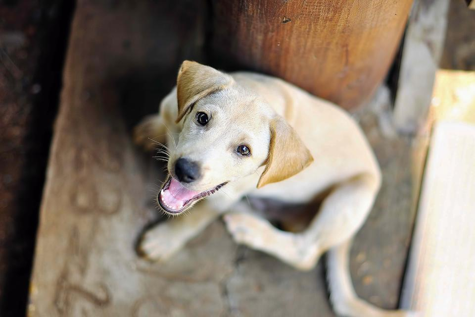 Lost & Found Pets: 6 Ways to Help Dogs & Cats Displaced By the Hurricane Into Shelters