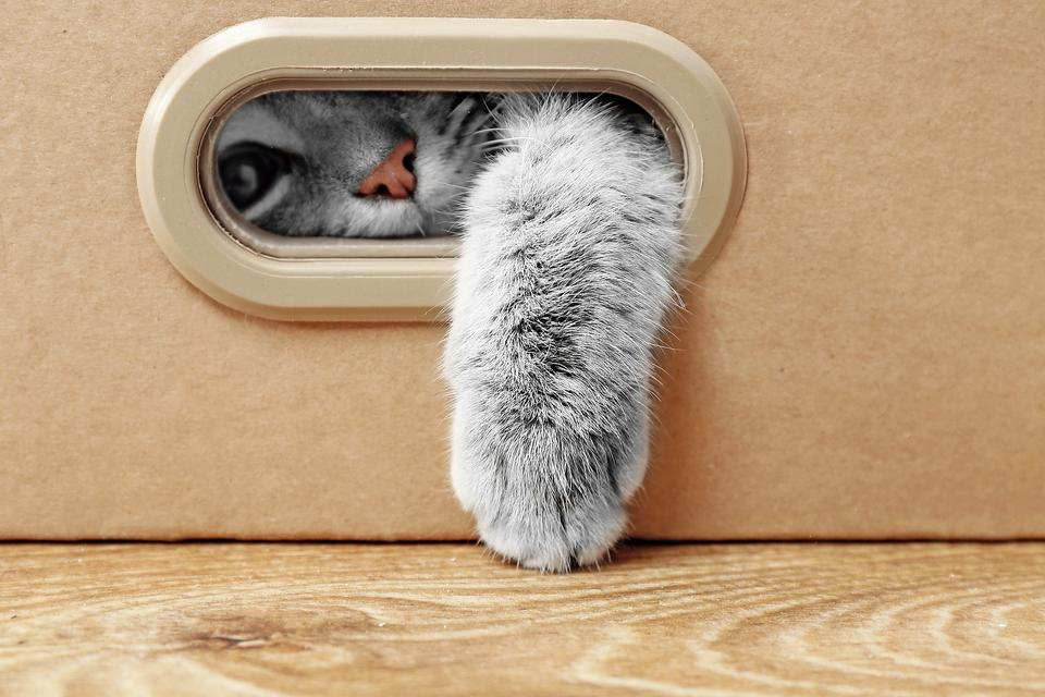 Lost Pets: Here's a Purr-fect Tip to Keep Track of Family Pets!