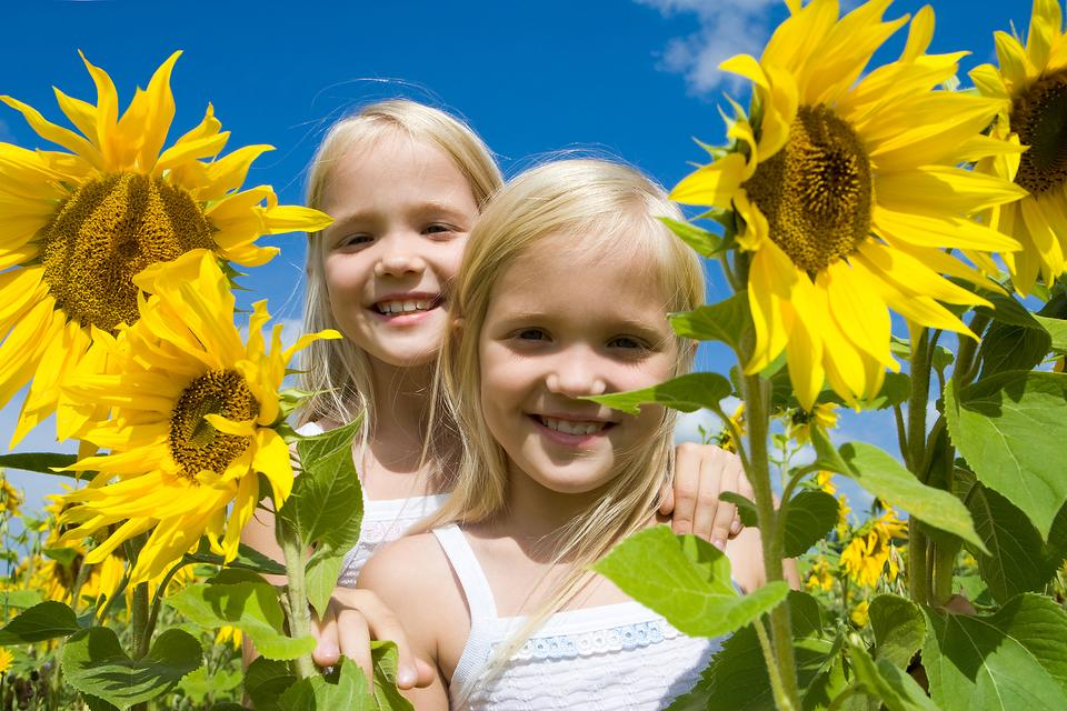 Need Some Sunshine in Your Life? Sunflowers to the Rescue!