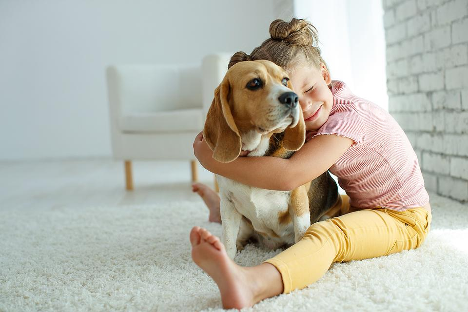 ​New Dog for Christmas? 8 Things You Need to Know From a Pro