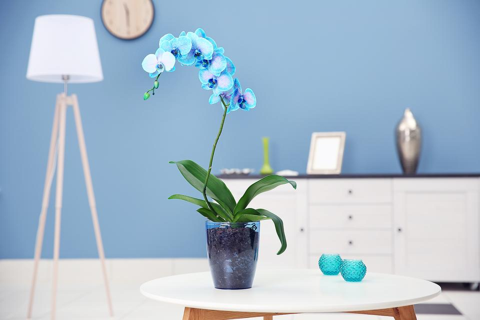 Why I Love Orchids: Long-lasting Elegance at Home, the Office or as a Gift