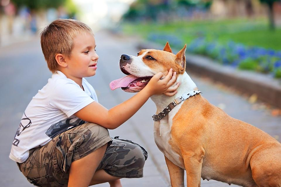 Protect Your Child From Dog Bites: 4 Things Kids Need to Know ASAP!