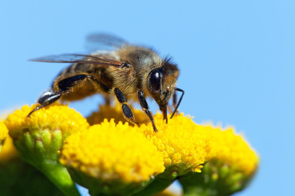 Save the Bees! 5 Ways You Can Help These Essential Pollinators Thrive