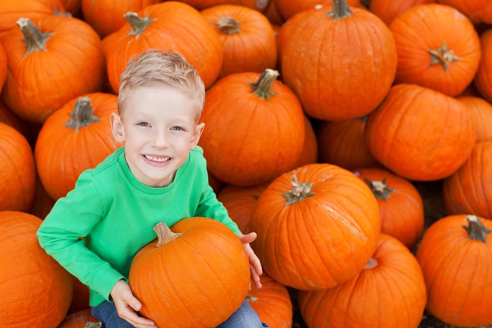 The Perfect Pumpkin: 4 Tips to Use When You're at the Pumpkin Patch!