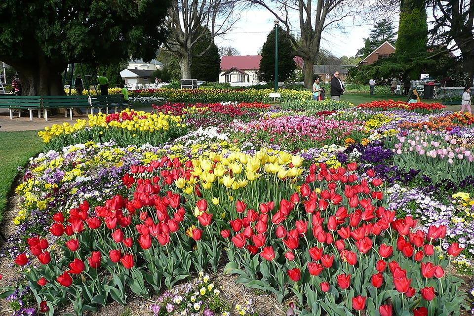 Tulip Time Festival in Bowral: One of Australia's Oldest & Best-Loved Floral Festivals
