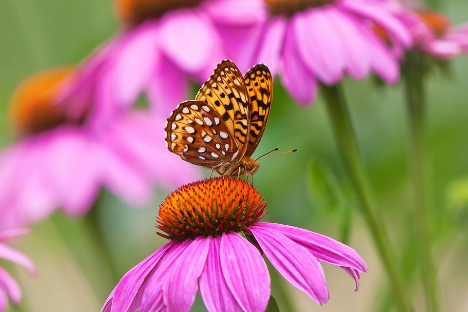 Thumb Not So Green? You Can Still Grow a Butterfly & Hummingbird Flower Garden (Stress Relief Guaranteed)!