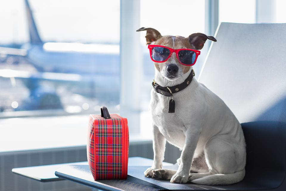 Traveling With Animals: Tips to Help Your Pet (and YOU!) Relax