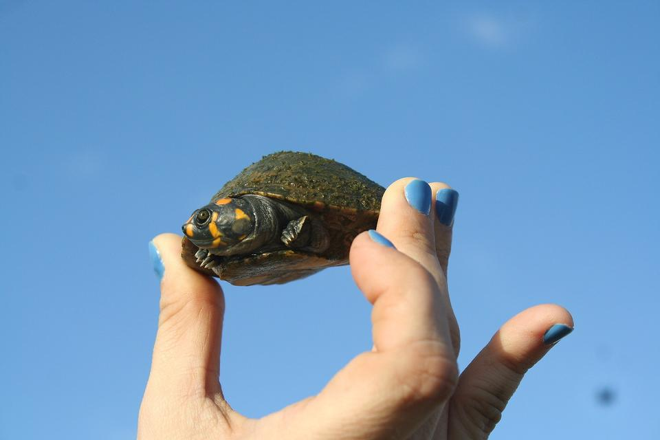 Pet Turtles: Before You Get Your Kids One, You Need to Read This!