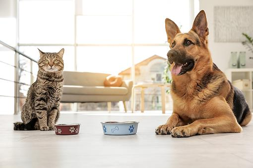 The Best Food for Dogs & Cats: 5 Reasons You May Want to Change Your Pet's Food