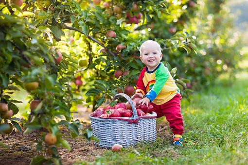 Take Your Kids Apple Picking: 5 Tips For This Fun Fall