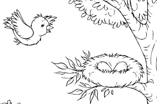 Bird Coloring Pages for Kids: Fun Printable Coloring Pages of Our Feathered Friends