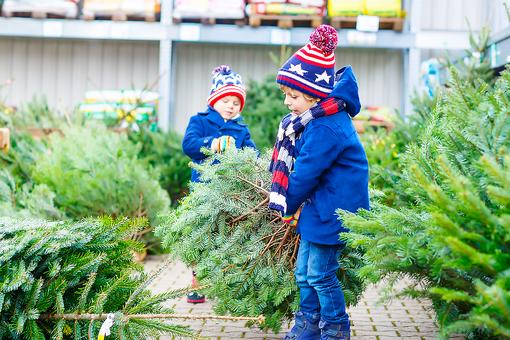 Christmas Tree Care: 3 Important Safety Do's & Don'ts for Families!