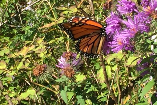 Create an Oasis In Your Yard With a Butterfly Garden Your Whole Family Will Love!