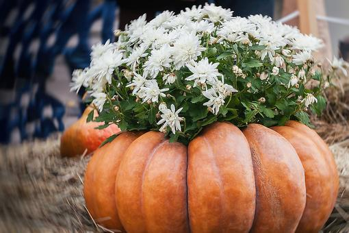 Creative Fall Decor: How to Combine Pumpkins & Mums for Autumn Decorating