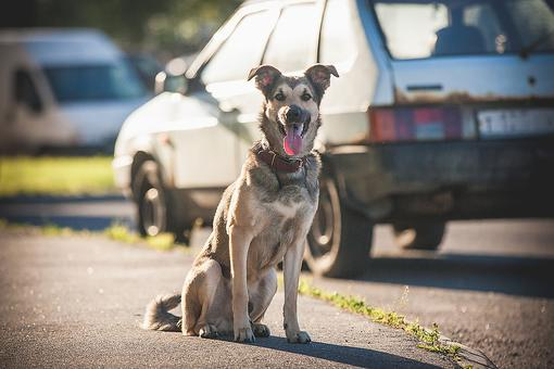 Dog Bite Prevention: The U.S. Postal Service Wants to Reduce the Number of Dog Bites (How You Can Help!)