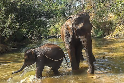 Elephant Adventures in Thailand: Play With Baby Elephants in Chiang Mai