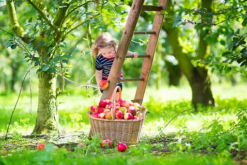 Take Your Kids Apple Picking: 5 Tips for This Fun Fall Family Activity!