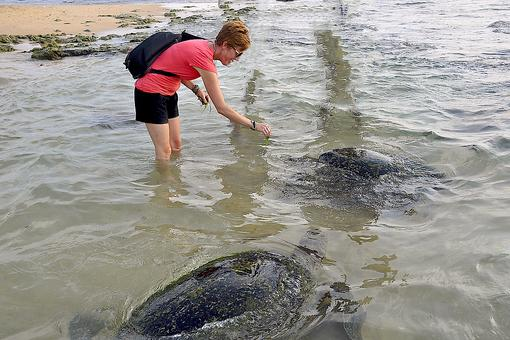 Feeding Giant Turtles & Marveling at Nature in Unawatuna, Sri Lanka