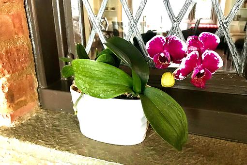 Finding Joy By Regrowing Orchids: How to Get Your Orchid to Bloom Again
