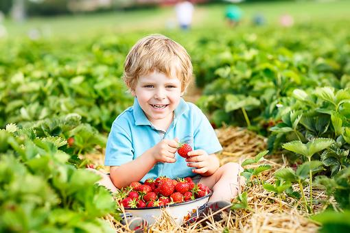 Gardening With Kids: Create a Backyard Garden as a Family for Fun, Health & Learning!