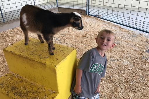 Green Meadows Petting Farm in Wisconsin Makes Learning Fun for Kids!