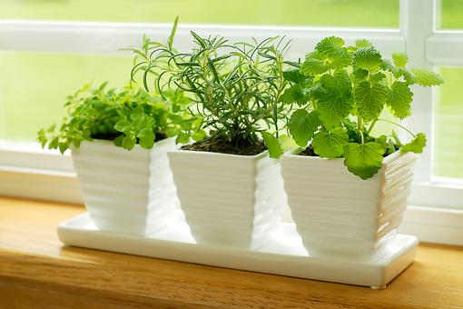 How to Grow an Indoor Herb Garden With Kids (Combine Food & Fun)!