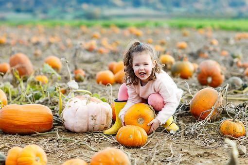 How to Pick a Pumpkin: 5 Tips for Picking the Perfect Pumpkins at the Pumpkin Patch