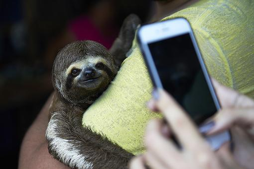 Protect Animals: Iconic Wild Animals Like Sloths Are Suffering for Selfies