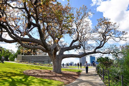 Kings Park in Perth: Flora, Fauna & Festivals in Western Australia