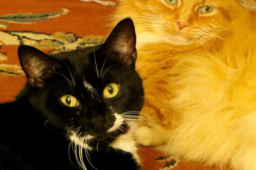 Life After Loss: Adopting Cats Helped Me Fight Grief (& Saved My Life)