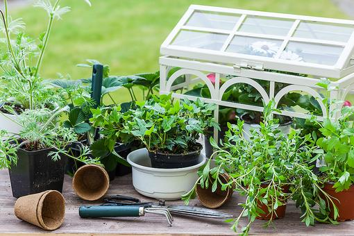 Make an Edible Herb or Vegetable Garden With Your Kids - But Drop the Shovel Until You Read These 3 Tips!