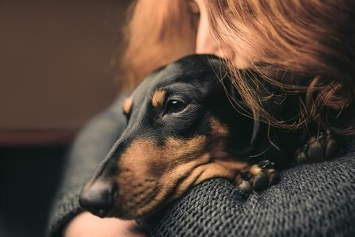 Family Pets: 5 Paw-some Ways Dogs Make You Happier & Healthier!