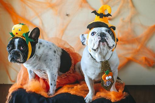 Pets & Halloween: 3 Health Hazards That Could Put Your Pet at Risk