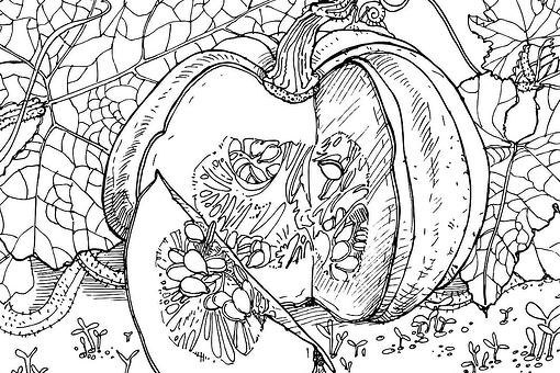 Pumpkin Coloring Pages: 8 Free & Fun Printable Coloring Pages of Pumpkins That Celebrate Fall