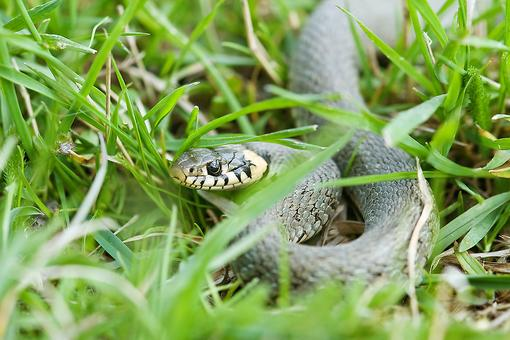 Snakebites: Tips to Help Prevent Getting Bit By a Snake & How to Respond If You Are