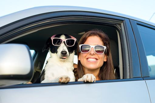 Taking Your Pet on Vacation? 3 Helpful Tips From a Veterinarian!