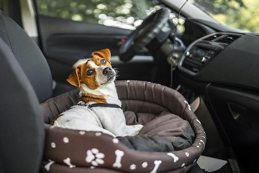 Traveling With Pets Checklist: ​A 9-Step Guide for Road Trips, Airline Travel & Train Travel With the Family Pet