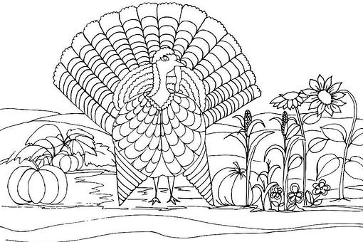 Turkey Coloring Pages: Free & Fun Printable Coloring & Activity Pages of Turkeys for Thanksgiving