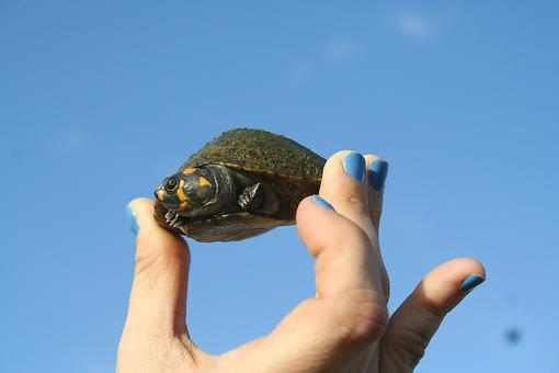 Before You Get Your Kids a Pet Turtle, You Need to Read This!