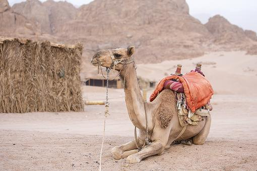 Riding Camels in Sharm el-Sheikh: What I Learned From a Bedouin Boy in the Egyptian Desert