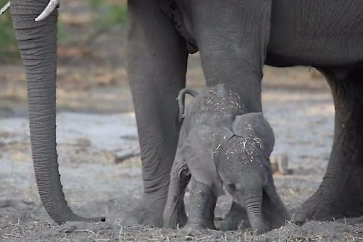 Why Are Moms Like Elephants? Watch This Adorable Video That You'll Never Forget & Find Out